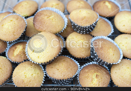 Freshly Baked Cupcakes stock photo, Freshly baked undecorated cupcakes standing cooling on a wire rack by Stephen Gibson