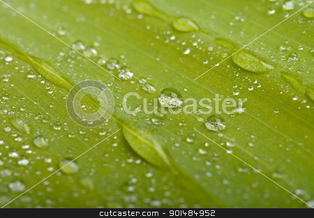 green leaf with water drops stock photo, green leaf with water drops by Rusgri