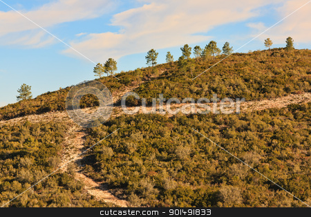 Hill Roads stock photo, Detail of an Hill with gravel crossroad and pine trees by Paulo M.F. Pires
