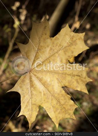 Autumn leaf closeup stock photo, Autumn leaf closeup in a sunny day by virin