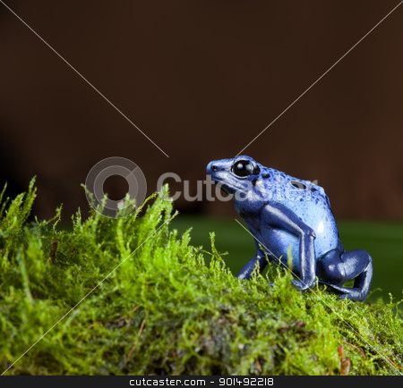 blue poison dart frog stock photo, blue poison dart frog of amazon rainforest in jungle terrarium tropical exotic pet animal by Dirk Ercken