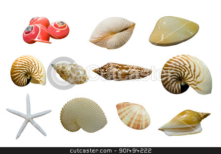 shellfish stock photo, shellfish by Komkrit Muangchan