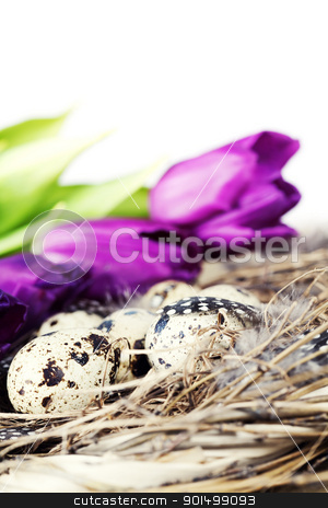 easter eggs with purple tulip flowers stock photo, easter eggs with purple tulip flowers  isolated on white background by klenova
