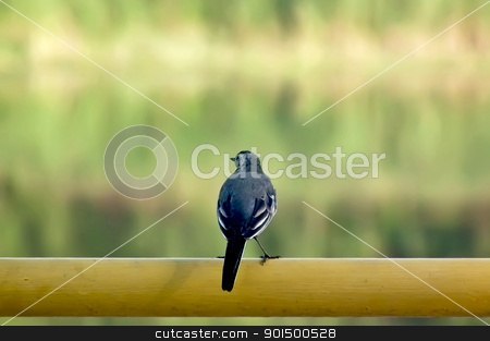 Wagtail on the tube stock photo, Wagtail sitting on the yellow tube on the background of green forest, brown coast, water by rezkrr