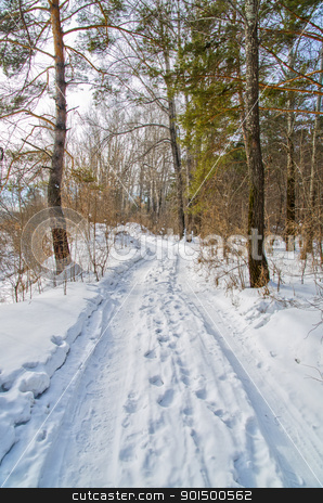 road in the winter forest stock photo, road in the winter forest by olinchuk