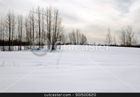Winter sunset stock photo, Trees, snow field on the background of the sunset by rezkrr