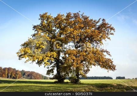autumn trees stock photo, An image of a nice autumn scenery by Markus Gann