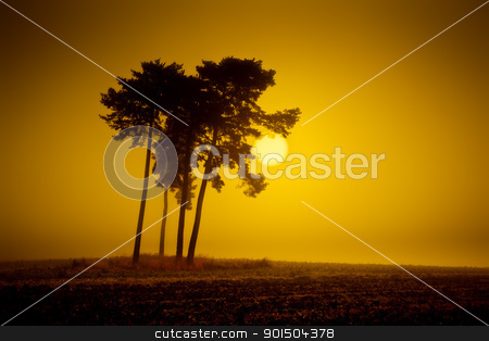yellow mood stock photo, An image of a beautiful landscape with fog in bavaria germany by Markus Gann