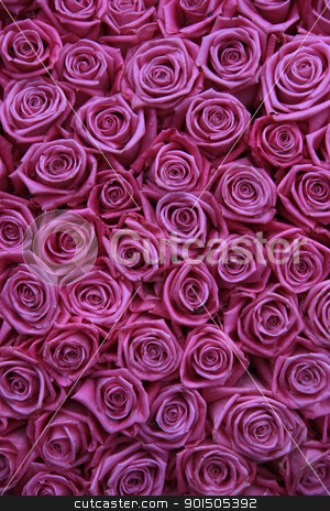 group of pink roses stock photo, Group of fuchsia pink roses in a floral arrangement by Porto Sabbia