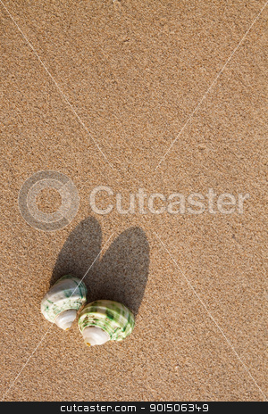 sea shells with sand as background stock photo, sea shells with sand as background by chaiwat