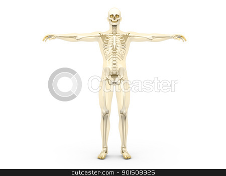 Skeleton stock photo, A medical visualization of human anatomy. 3D rendered Illustration. Isolated on white. by Michael Osterrieder