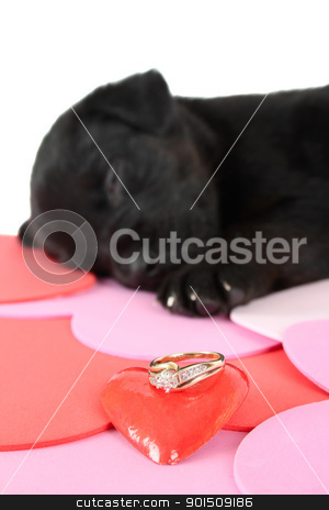 Black puppy stock photo, Cute black puppy with red ceramic heart by Vanessa Van Rensburg