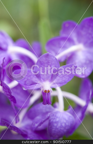 Selection beautiful orchid stock photo, Selection beautiful orchid on blur background. Selective focus. by Iryna Rasko