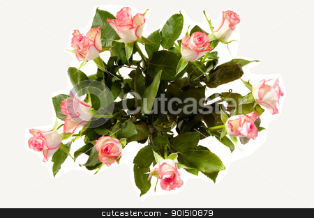 Rose bouquet stock photo, Bouquet of roses seen from above isolated on white background by Lars Christensen