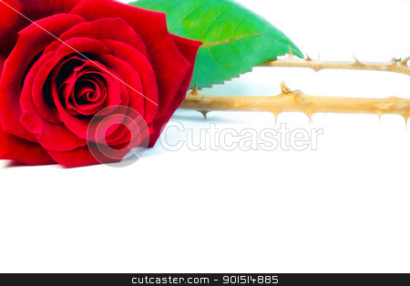 Thorns stock photo, Red rose with thorns. by Primus