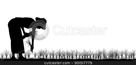 Transplanting rice stock vector clipart, Editable vector silhouette of an asian woman planting rice seedlings in a paddy field by Robert Adrian Hillman