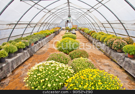Greenhouse  stock photo, Greenhouse interior during autumn season, Piedmont, italy by Perseomedusa