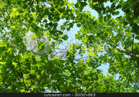 Fresh spring green tree leaves canopy in a forest.. stock photo, Fresh spring green tree leaves canopy in a forest.. by Stephen Rees