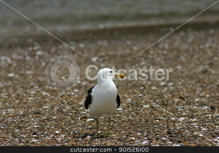 Seagull stock photo, Seagull sitting on the beach by DirkR