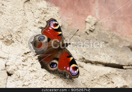 European Peacock (Inachis io) stock photo, A European Peacock (Inachis io) sits in the sun on a brick wall. by DirkR