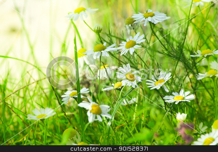 green meadow stock photo, green fresh meadow in detail by FranziskaKrause