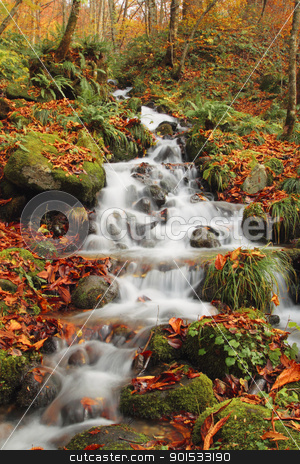 Autumn Colors of Oirase River stock photo, Autumn Colors of Oirase River, located at Aomori Prefecture Japan  by yoshiyayo