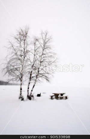 Aspen Trees Canada stock photo, Aspen Trees Canada Saskatchewan Canada Winter path road by Mark Duffy