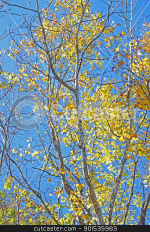 autumn forest  against blue sky stock photo, autumn forest  against blue sky in Iwate,Japan by yoshiyayo