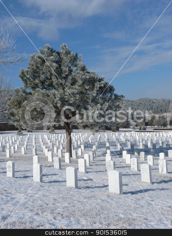 Frost cover tree at a Cemetery stock photo, A Frost covered tree at a National Cemetery by Jan Nickelson