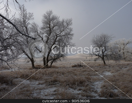 Frosty Trees as the Fog Lifts stock photo, Frost on the grass and trees as the Fog lifts by Jan Nickelson