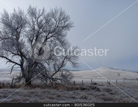Lone Frost Covered Tree as the Fog Lifts stock photo, A lone frost coverd tree as the Fog lifts by Jan Nickelson