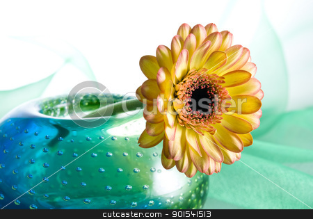 Yellow Margarita Flower stock photo, Yellow margharita flower in a colorful vase isolated on white background by Tiramisu Studio