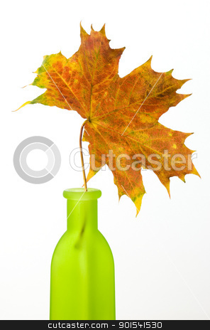 Maple leaf stock photo, Maple leaf in green bottle isolated on white background by Tiramisu Studio