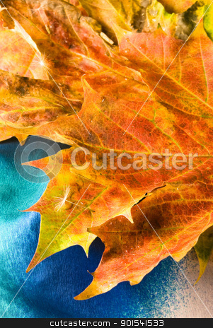 Maple leaf stock photo, Maple leaf background by Tiramisu Studio