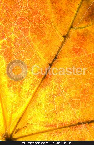 Maple leaf stock photo, Maple leaf texture background by Tiramisu Studio