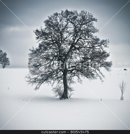 snowy tree stock photo, An image of a nice tree in a winter scenery by Markus Gann