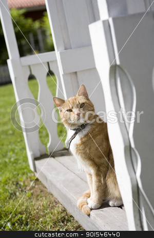 Domestic cat stock photo, Domestic cat sitting on a bench by Anne-Louise Quarfoth