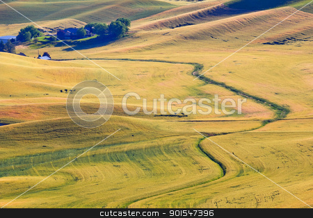 Yellow Green Wheat Grass Farm Road Patterns Palouse Washington S stock photo, Green Yellow Wheat Grass Fields Farm Road Palouse Washington State Pacific Northwest by William Perry