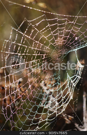 Spider web stock photo, spider web by Sarka
