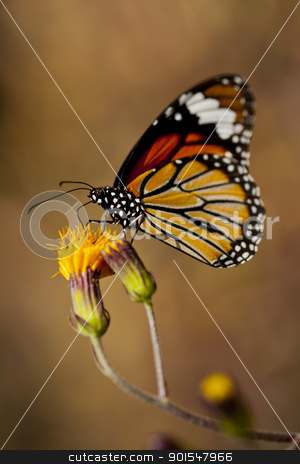 Butterfly stock photo, Butterfly by pixs4u
