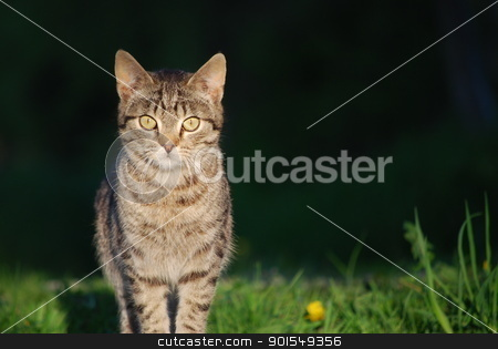 kitten stock photo, cat by Sarka
