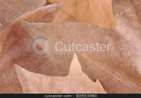 Autumn Leaves stock photo, Stacked leaves to illustrate Autumn by ruigsantos