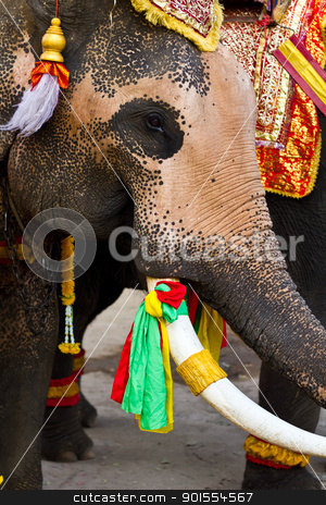 elephant close up stock photo, elephant close up in lopburi of Thailand by Lavoview