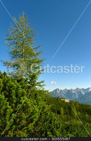 A solitary pine tree / un pino solitario stock photo, On the Pelmo Mountain's slopes / Alle falde del Monte Pelmo by emiliano beltrani