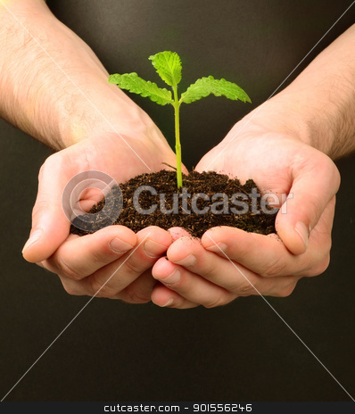 fresh shoot, from a small pile of earth hold in human hands stock photo, fresh shoot, from a small pile of earth hold in human hands by bakelyt