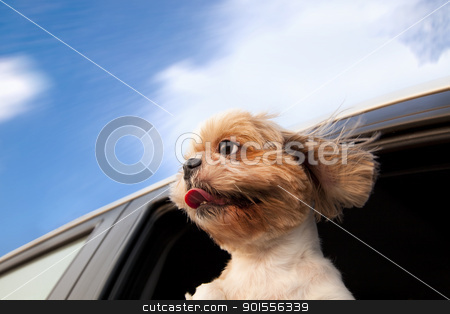 Dog in a Car Window and enjoy road trip stock photo, Dog in a Car Window and enjoy road trip by tomwang