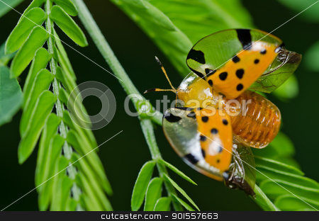 orange beetle in green nature stock photo, orange beetle in green nature or the garden by sweetcrisis