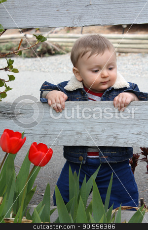 Garden baby stock photo, Cute baby boy standing in garden with flowers by Liznel