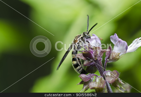 mammoth wasp in the green nature stock photo, mammoth wasp in the green nature or in garden by sweetcrisis