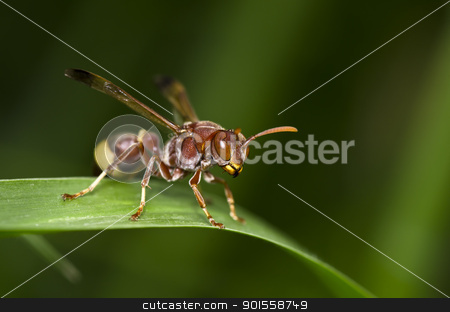 wasp in green nature stock photo, wasp in green nature or in garden by sweetcrisis